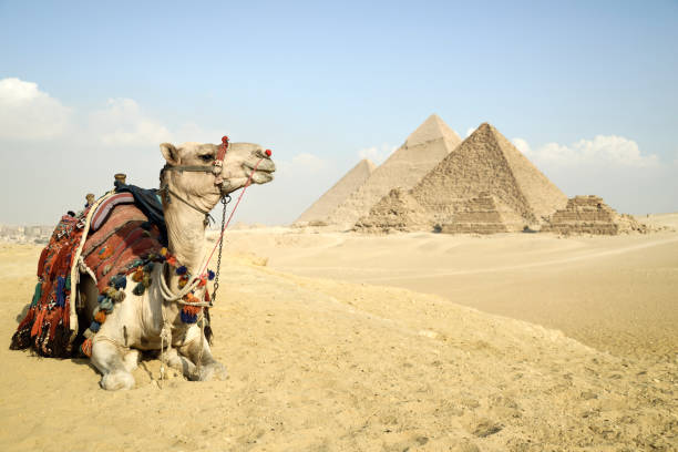 panoramic view of the pyramids from giza plateau, cairo, egypt - pyramid stock photos and pictures