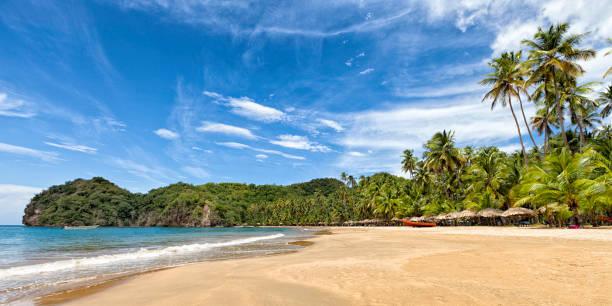 Panoramic view of tropical caribbean beach with coconut trees picture id1136165442?b=1&k=6&m=1136165442&s=612x612&w=0&h=4w4sax0nawlllfp0s mo6dzr5tjb o meyxxevxe1w4=