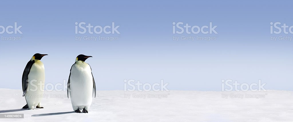 Panoramic view of two Penguins in the Arctic royalty-free stock photo