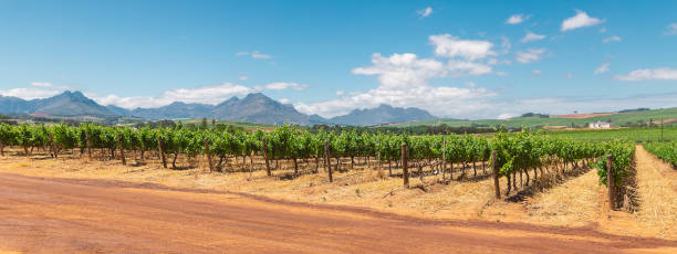 Panoramic view of vineyard and the mountains in Franschhoek town in South Africa stock photo