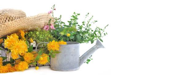 vista panorámica sobre el sombrero de astraw en la flor amarilla y un poco de riego puede - foto de stock