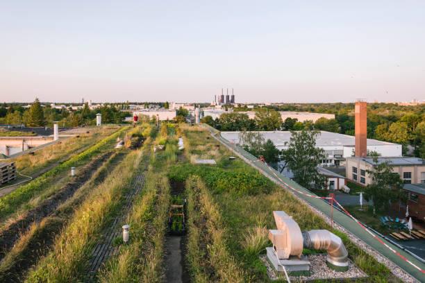 panoramablick über ein dachgartenprojekt in berlin - dachgarten stock-fotos und bilder