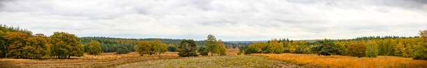 Panoramic view over the Loenermark in the Veluwe nature reserve during fall