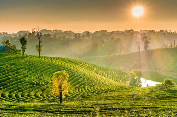 Panoramic view Sunrise and mist on mountain view at the north of thailand Panoramic view Sunrise and mist on mountain view at the north of thailand chiang mai province stock pictures, royalty-free photos & images