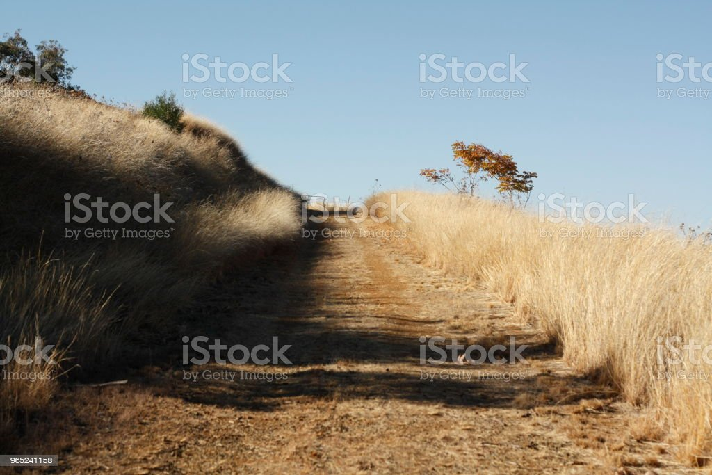 panoramic views of a road and gate through dry grassy drought stricken farm land in Tamworth, NSW, rural Australia royalty-free stock photo