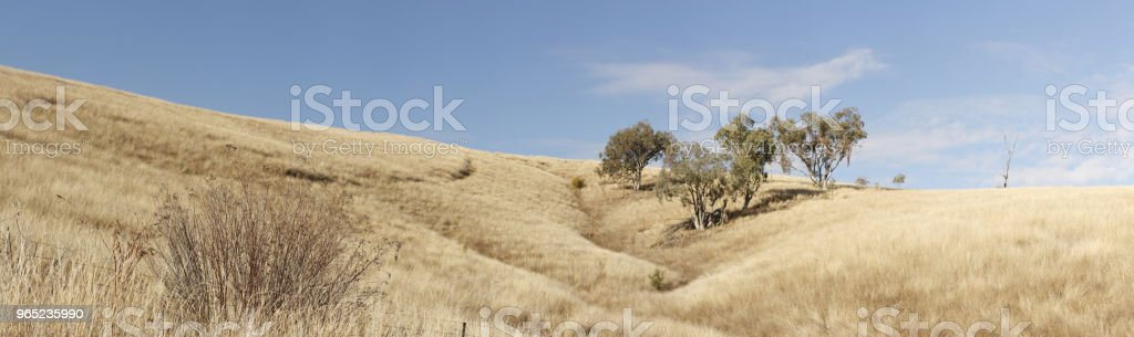 panoramic views of dry grassy drought stricken farm land in Tamworth, NSW, rural Australia zbiór zdjęć royalty-free