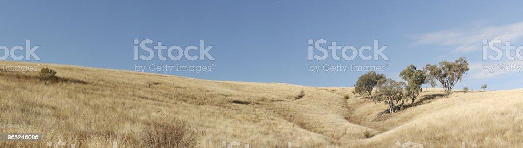 panoramic views of dry grassy drought stricken farm land in Tamworth, NSW, rural Australia zbiór zdjęć royalty-free