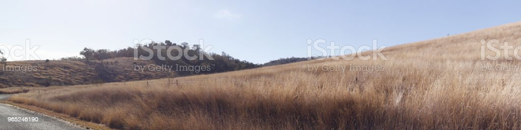 panoramic views of dry grassy drought stricken farm land in Tamworth, NSW, rural Australia royalty-free stock photo