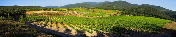 Panoramic vineyard landscape Panoramic landscape in the Provence vineyard. var stock pictures, royalty-free photos & images