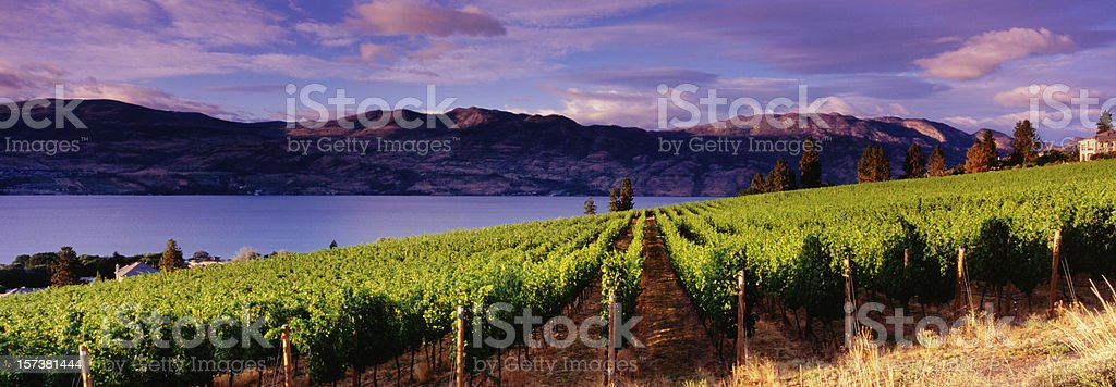 Panoramic Vineyards Kelowna stock photo