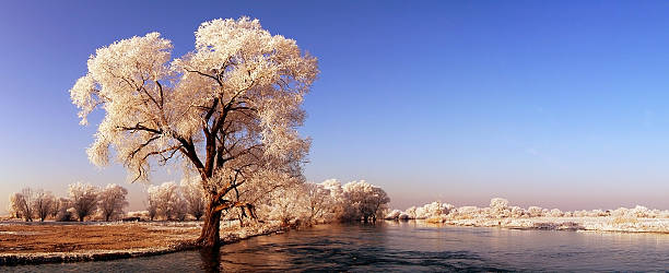panormic winter landscape of havel river - 하벨란트 군 뉴스 사진 이미지