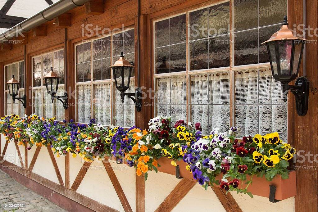 flower boxes with pansies in front of windows in Nuremberg, Germany