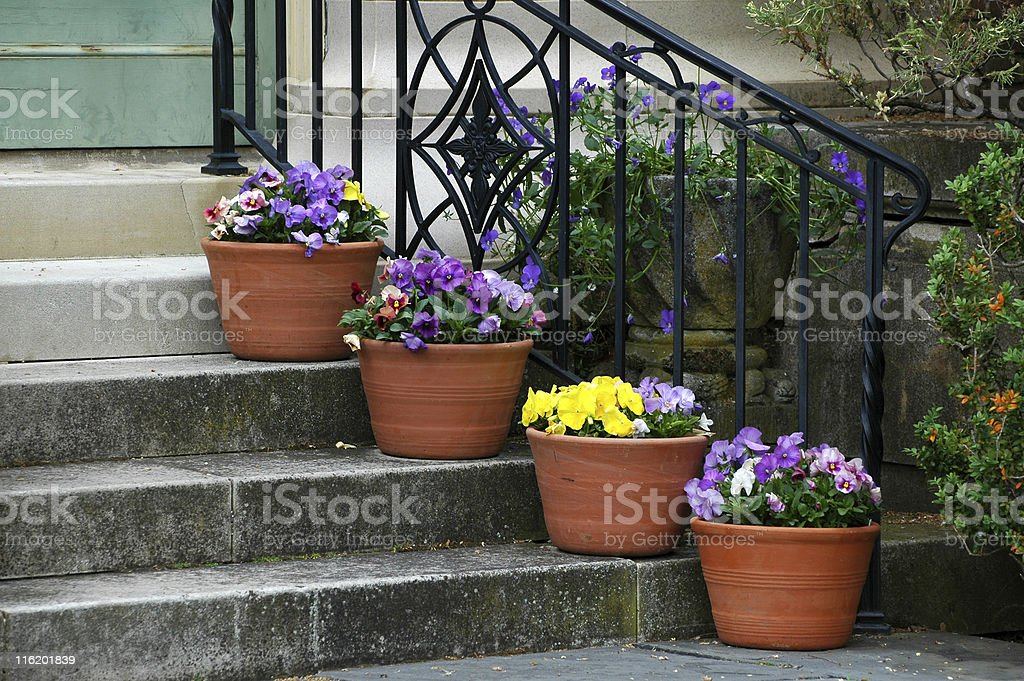 pansies in pots flanking the stairway stock photo
