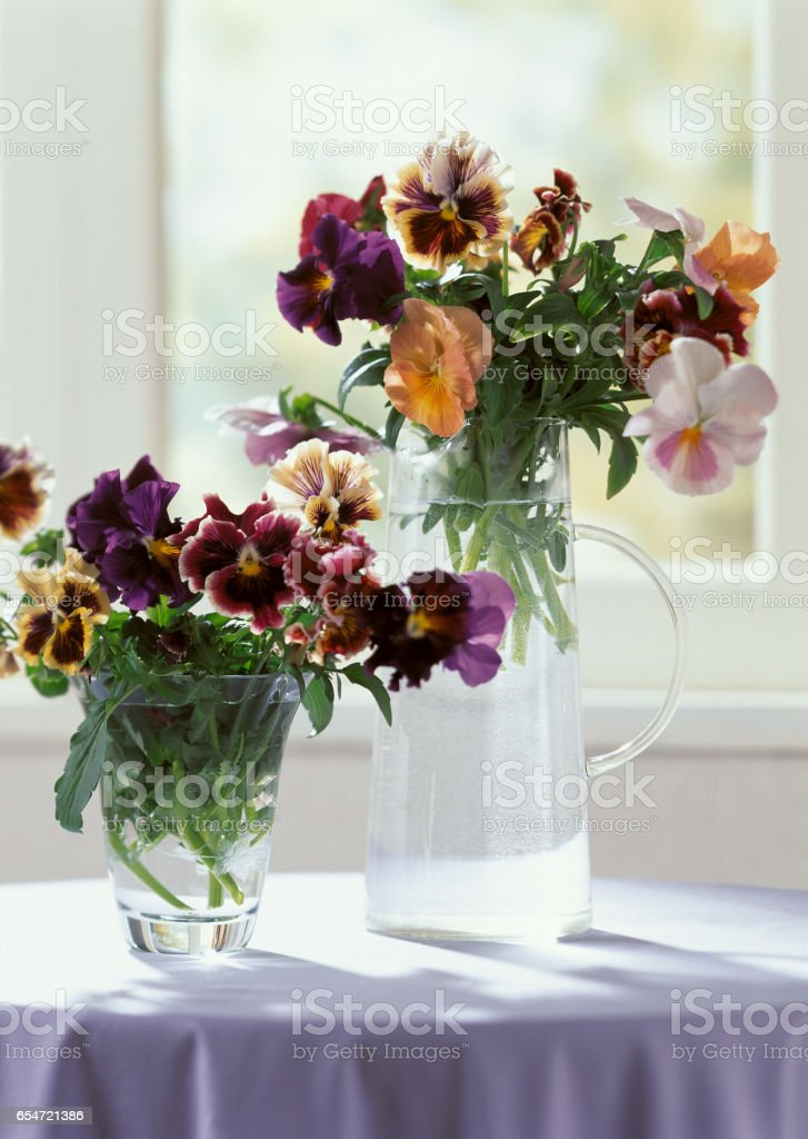 Pansies in window treatments stock photo