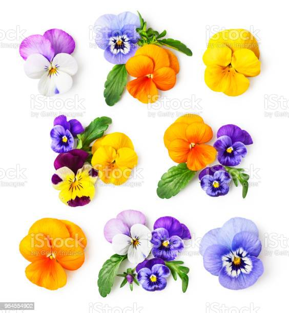 Photo of Pansy flowers and viola tricolor set