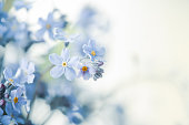 istock pansy flowers background 1247760541