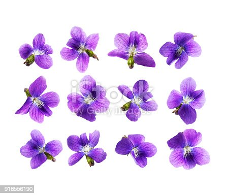 Pansy flowers isolated on white background