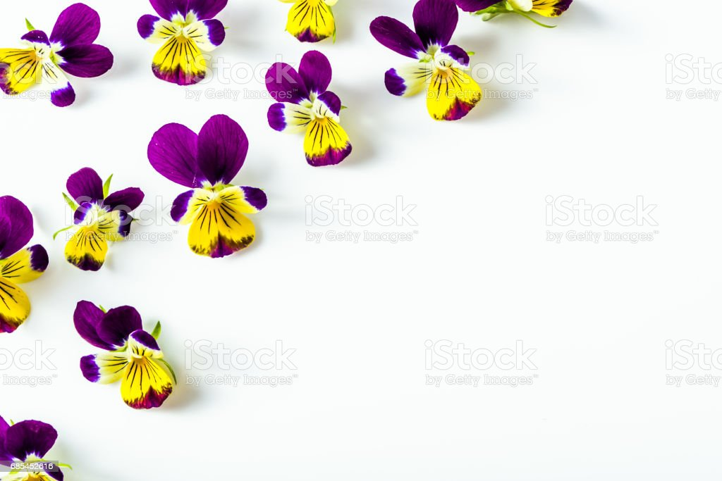 Pansy flowers, summer wildflowers on white background, overhead zbiór zdjęć royalty-free