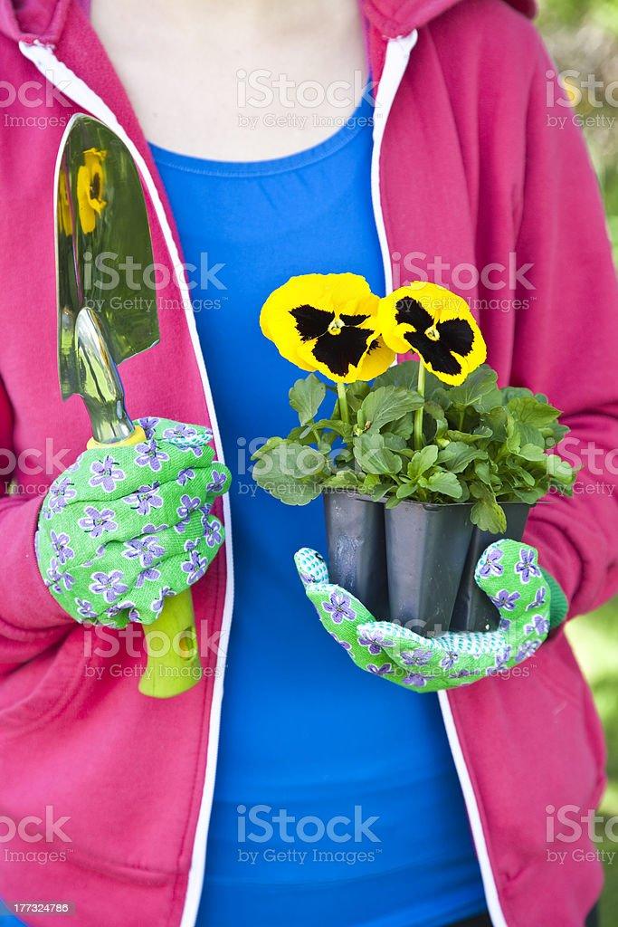 Pansy Gardener royalty-free stock photo