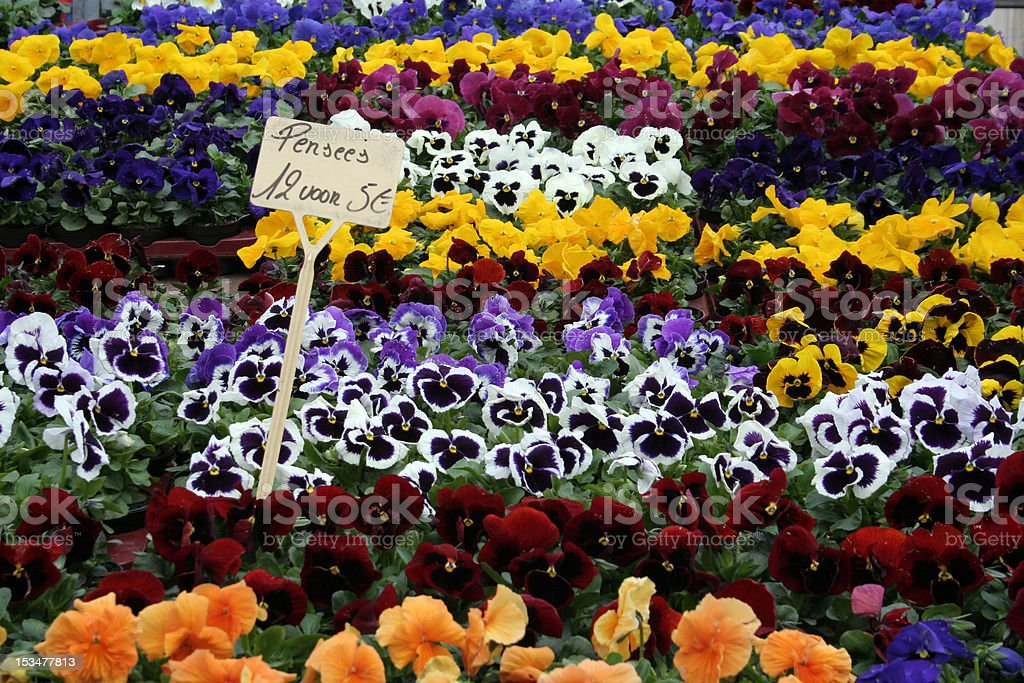 Pansys in a flower market royalty-free stock photo