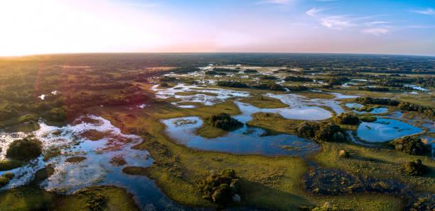 pantanal photographed in corumbá, mato grosso do sul. pantanal biome, brazil. - ambientalista foto e immagini stock