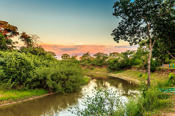 Pantanal wetlands, Brazil stock photo