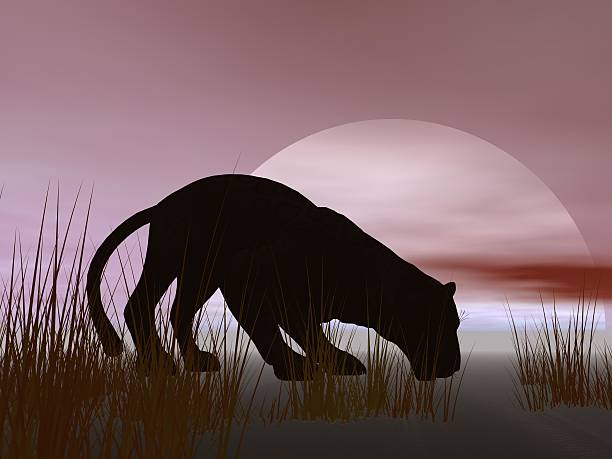 panther und sky - schwarzer puma stock-fotos und bilder