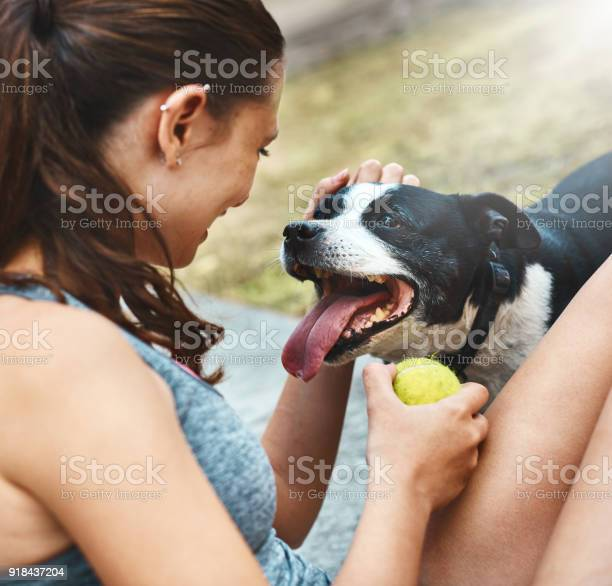 Panting excitedly staffie waits for owner to throw ball picture id918437204?b=1&k=6&m=918437204&s=612x612&h=z 3tkamvae9rz8u9im1knu41 qabbzcms2epq8vji58=