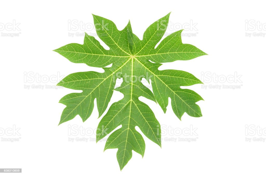 Pictures Of Papaya Leaves