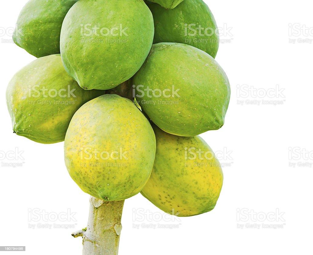Papaya tree royalty-free stock photo