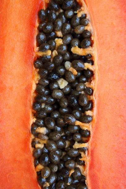 papaya_seeds_a stock photo
