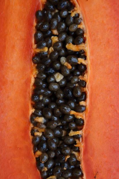 papaya_seeds_b stock photo