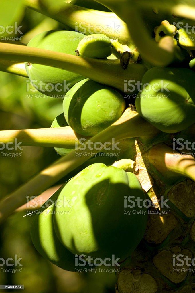 Papayas on Hawaii stock photo