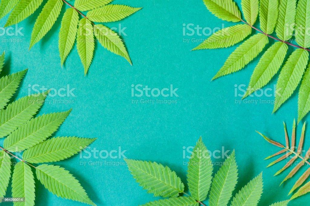 Bacground de papel com folhas verdes naturais - Foto de stock de Abstrato royalty-free