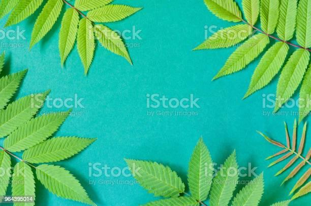 Foto de Bacground De Papel Com Folhas Verdes Naturais e mais fotos de stock de Abstrato
