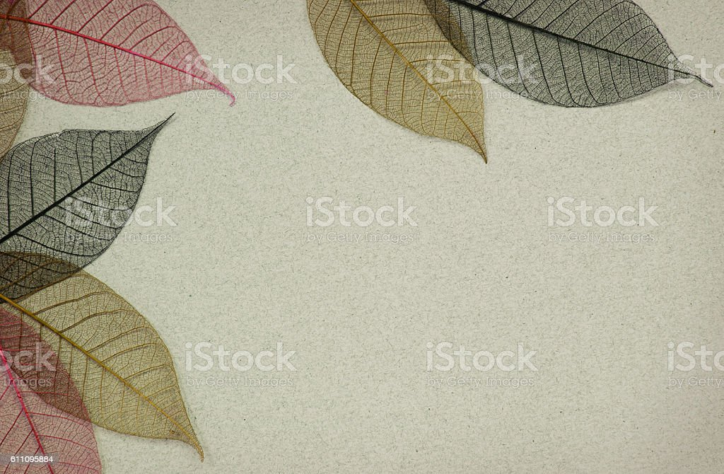 Paper background with leaf skeletons stock photo