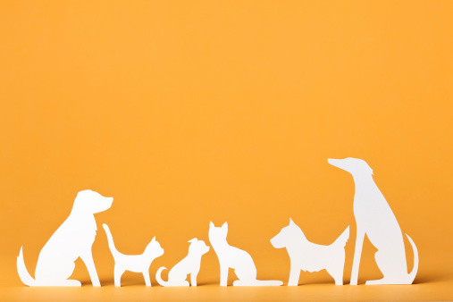 Paper concept of different cats and dogs.