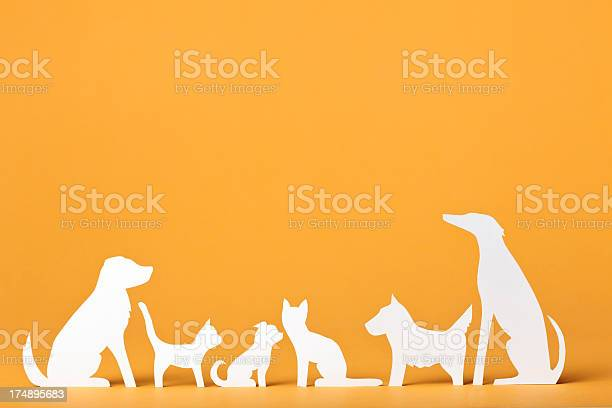 Paper concept a pack of cats and dogs picture id174895683?b=1&k=6&m=174895683&s=612x612&h=k08givombugoxalnjzagrmht8hm5tddgrajjnwl3lei=