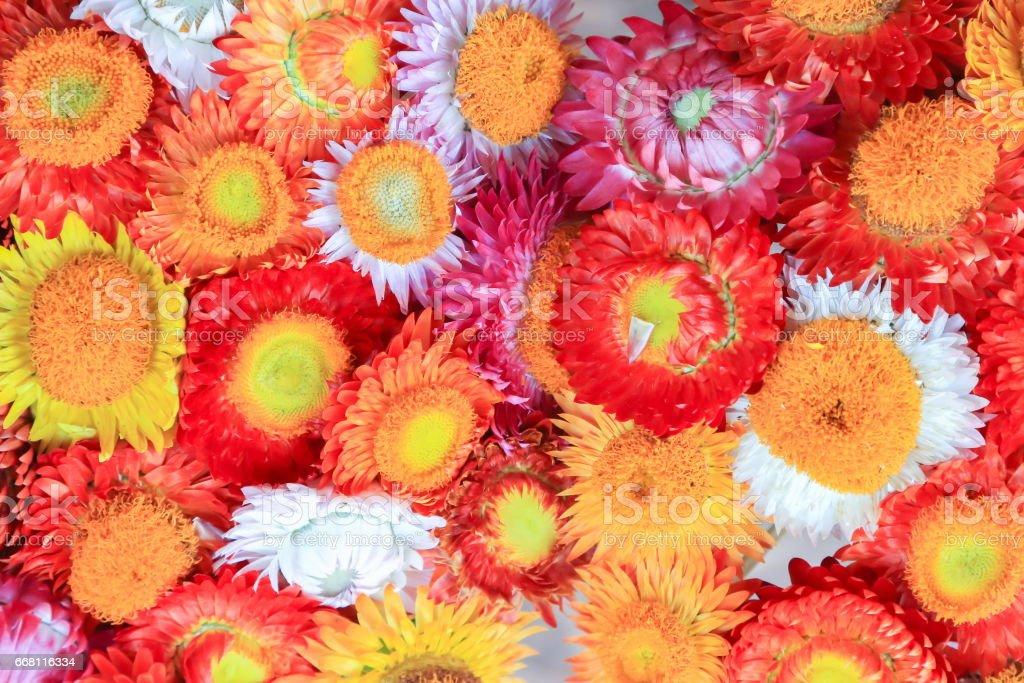 Paper flower. stock photo