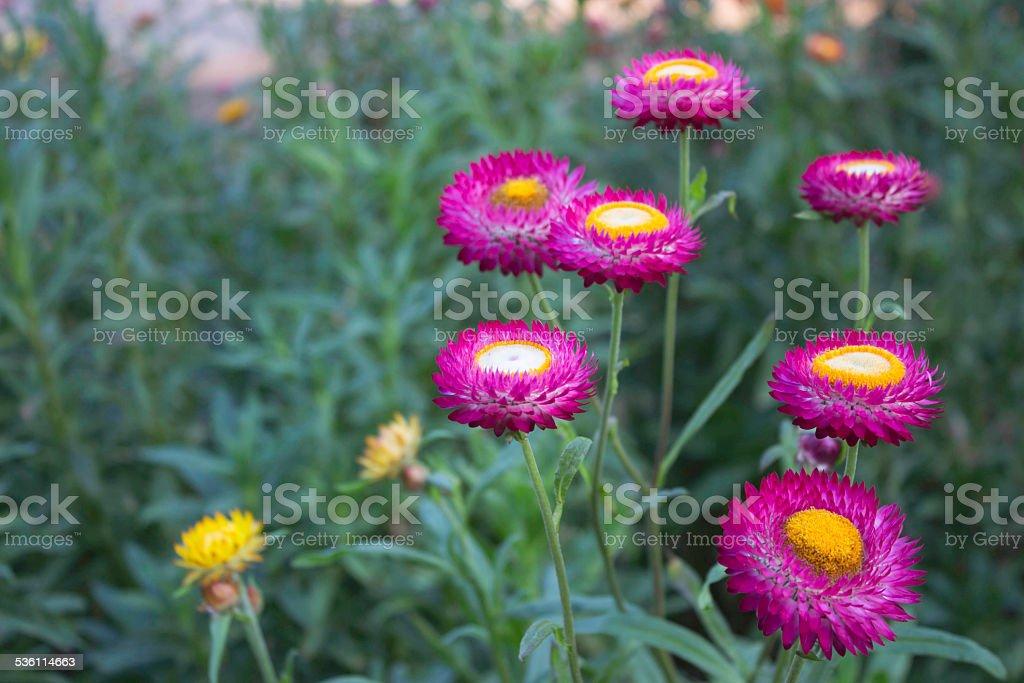 Paper Flowers stock photo