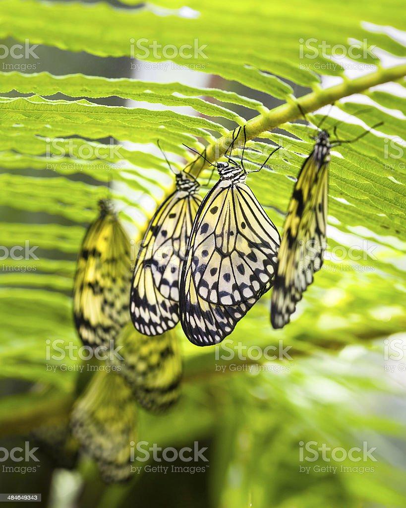 Paper Kite Butterflies stock photo