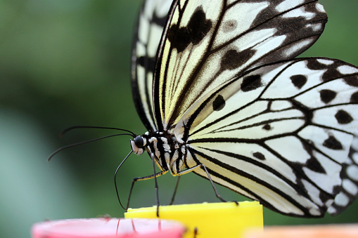 Paper Kite Butterfly Detail Stock Photo - Download Image Now