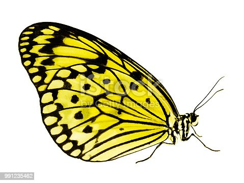 istock Paper kite butterfly isolated on white background, color change to yellow 991235462