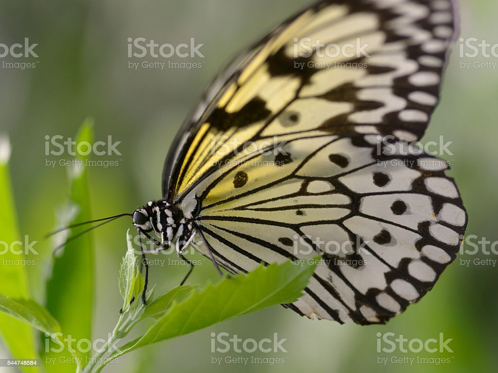 Paper kite butterfly on leaf stock photo