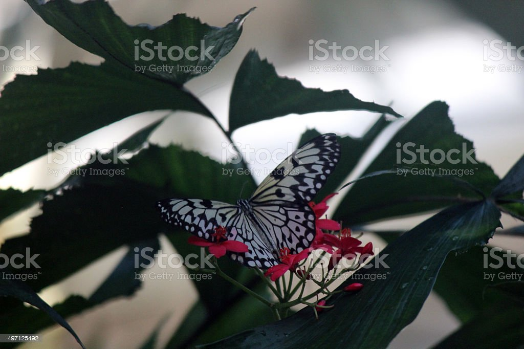 Paper Kite Butterfly on Red Flowers stock photo