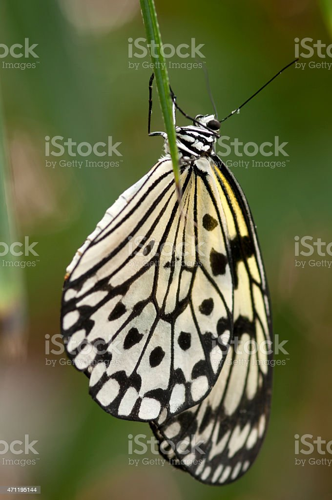 paper kite butterfly - Royalty-free 2015 Stock Photo