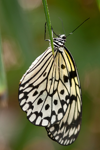 Paper Kite Butterfly Stock Photo - Download Image Now