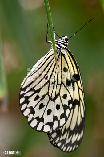 Paper Kite Butterfly Stock Photo & More Pictures of 2015