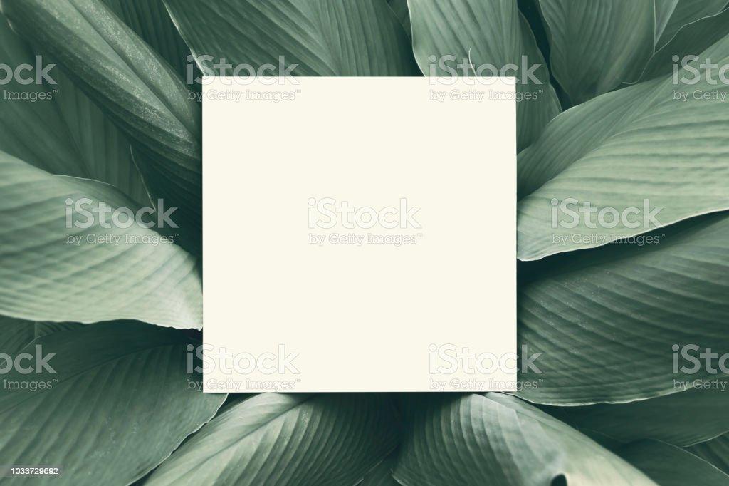 Papper håna upp vitt kort på en grön Galingale lämnar. Kreativ layout med naturen koncept. bildbanksfoto