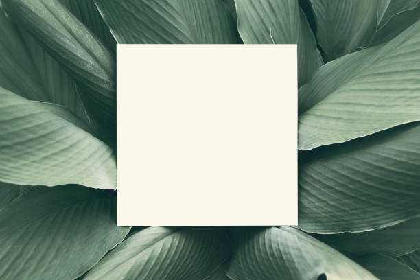 paper mock up white card on a green galingale leaves. creative layout with nature concept. - tree logo stock photos and pictures